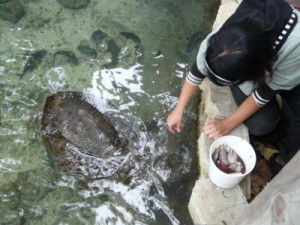 Feeding sea turtles at the Key West Aquarium
