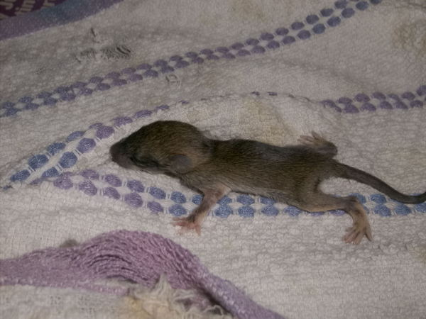 Raising A Wild Rat Wild Earthling South Florida And Beyond